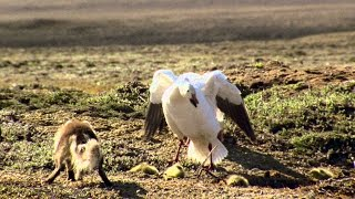 Download Planet Earth - The Complete Collection - Season 1, Episode 7, 'Great Plains' Video