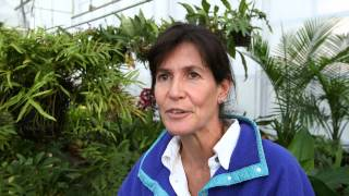 Download BTI ″Why Plant Research″ Video