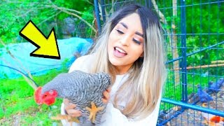 Download I got a pet Chicken... Video