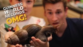Download Biggest Snail in the WORLD // On The Road (Ep17) Video