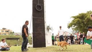 Download Revista PitBull Colombia - 1er. Regional Eje Cafetero 2014 - Escala Vertical Video