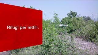 Download Cosa c'entra il nuovo Gateway Basel Nord con i «rifugi per rettili». Video