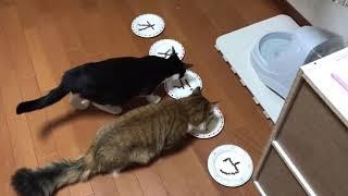 Download 保護猫ひまわり「出会って1年」記念日 Video
