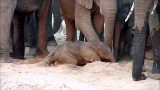 Download A new elephant life Video