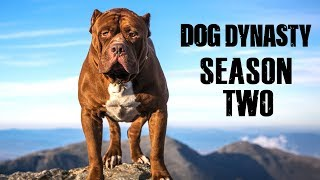 Download Dog Dynasty: Entire Season Two (1 Hour) Video