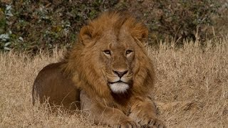 Download 19-day Kenya and Tanzania African Wildlife Safari (2013) Video