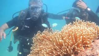 Download Scuba Diving @ Havelock Island, Andaman Video