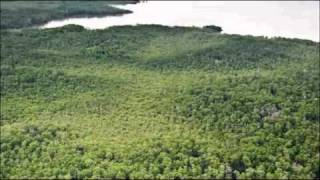 Download The Neotropical Migratory Bird Conservation Act Video