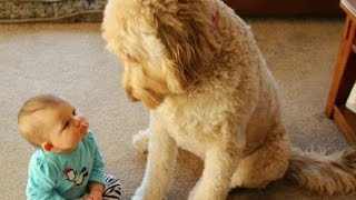 Download FUN CHALLENGE: Try NOT to laugh - Funny & cute dogs and kids Video