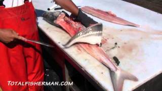 Download How To Fillet A Sturgeon Video