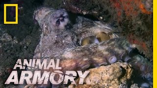 Download Houdini of the Sea | Animal Armory Video