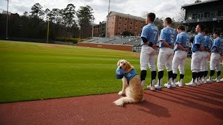 Download A dog in the dugout Video