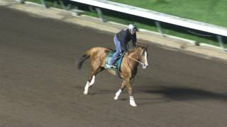 Download California Chrome Workout from Saturday, November 26th Video