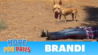 Download Coyote, Pit Bull, rescuer on the ground and behaviors I have never seen before! Video