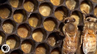Download Honey Bees Make Honey ... and Bread? | Deep Look Video