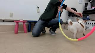 Download 犬の幼稚園 ティファニーちゃんとトレーニング Video