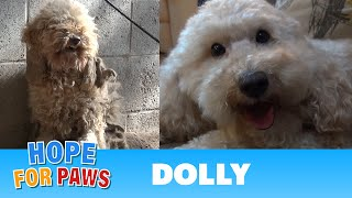 Download Hope For Paws: A severely matted poodle gets rescued and then makes a transformation of a lifetime! Video
