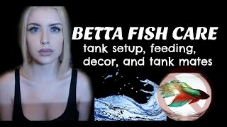 Download LET'S TALK ABOUT BETTA FISH (Care Guide) Video