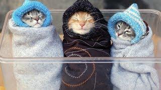 Download Смешные Коты и Собаки. ПРИКОЛЫ С ЖИВОТНЫМИ 2019! #13 Video