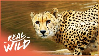 Download The Waterhole [Survival One Hour Documentary] | Wild Things Video
