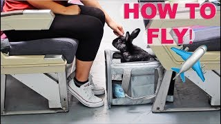 Download HOW TO FLY ON AN AIRPLANE WITH A RABBIT ✈️✈️✈️ Video