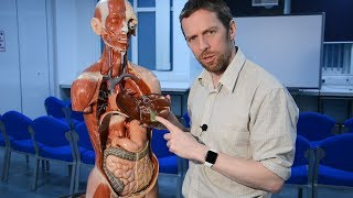 Download Gallbladder and biliary tree (anatomy, gallstones) Video