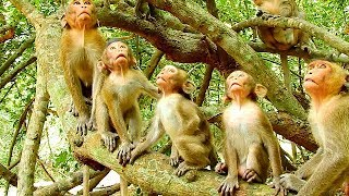Download NEVER SEEN BEFORE!!!! ALL BABY MONKEYS SIT & LOOKING UP LIKE THIS Video