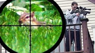 Download Chipmunk Pest Control (June 25, 2011) Video
