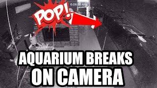 Download MY AQUARIUM EXPLODED!! Video