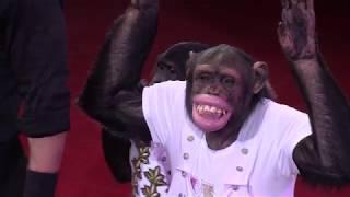 Download Дан Запашный / Акробатическое трио с шимпанзе (2018) FHD Video