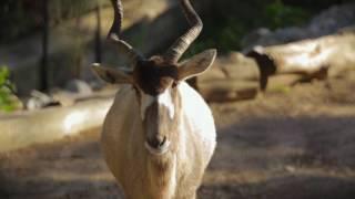 Download Jardim Zoológico - BI Ádax (Animais Anónimos) Video