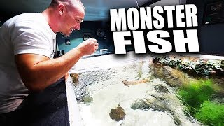 Download HAND FEEDING MY FISH AQUARIUMS!! | The King of DIY Video