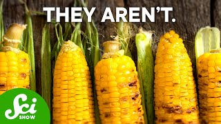 Download Why are GMOs Bad? Video