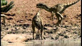 Download Infant Allosauruses - Walking with Dinosaurs: Ballad of Big Al - BBC Video