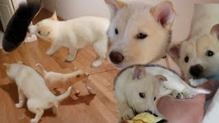 Download LITERALLY JUST A VIDEO OF MY DOG CHEWING ON ME AND OTHER THINGS! Video