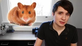 Download The Story of My Hamster Video