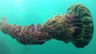Download 10 Deep Sea Creatures Faced By Divers Video