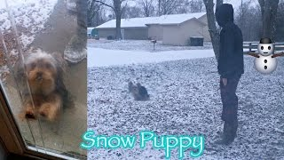 Download Neely's First Snow Experience | Yorkies in Snow Video