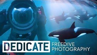 Download Meet the photographer that dives with orcas: Jacques de Vos. Video