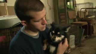 Download Mississippi Puppy Mill Raid Video