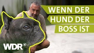 Download Dem Hund Grenzen setzen | Hunde verstehen (1) | Tierratgeber | WDR Video