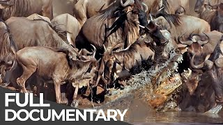 Download ► Serengeti - The Adventure (Full Documentary, HD) Video
