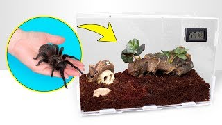 Download How Tarantulas Grow | A Perfect Spider House Video