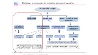 Download Common challenges and solutions in microbiome analysis workflows Video