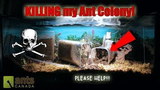 Download OH NO! SOMETHING IS KILLING MY ANT COLONY! Video