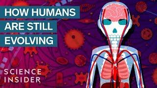 Download 3 Surprising Ways Humans Are Still Evolving Video