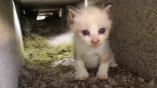 Download 野良猫の子猫、暑い昼間はこんな所で休んでいます。 Video