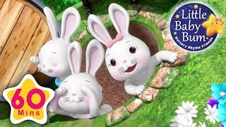Download Bunny Hop Hop | Plus Lots More Nursery Rhymes | 60 Minutes Compilation from LittleBabyBum! Video