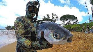 Download Spearfishing Hawaiian Style - Big Catch!! Video