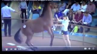 Download Woman Yanks Chain On Horse - Sexist Horse Hates Women So He Ripped Her Shirt Off Video